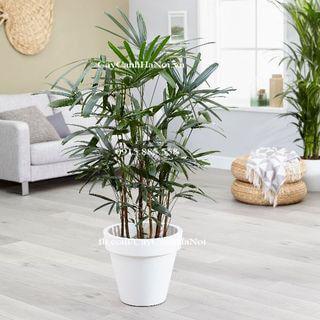 10-cay-canh-tot-nhat-trong-nha-1 10 loại cây thanh lọc không khí trong nhà tốt nhất